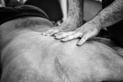 Terapeuta de sexo masculino Giving Back Massage del masaje a servir Imagen de archivo