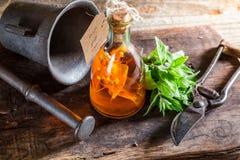 Terapeutisk tinktur i flaskor som naturlig medicin Arkivbild