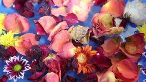 Terapia de la flor en el agua almacen de metraje de vídeo