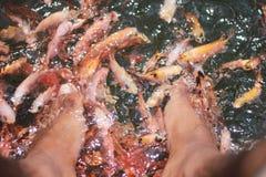 Terapia de los pescados Río Sri Lanka de Maadu imágenes de archivo libres de regalías