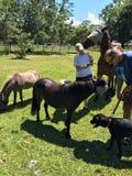Terapia del caballo Fotos de archivo