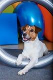 Terapia del perro Imágenes de archivo libres de regalías