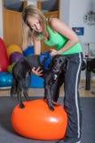 Terapia del perro Fotografía de archivo