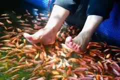 Terapia della stazione termale del pesce a Madu River In Sri Lanka Immagine Stock Libera da Diritti