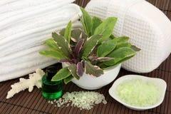 Terapia della stazione termale dell'erba Immagine Stock