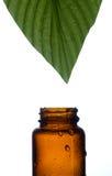 Terapia di erbe Fotografia Stock Libera da Diritti