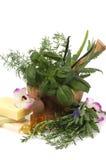 Terapia di erbe Fotografia Stock