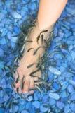 Terapia dos peixes Imagens de Stock Royalty Free