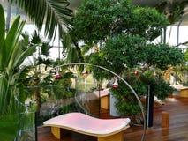 Terapia e palmeiras da luz infra-vermelha Imagens de Stock