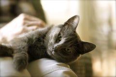 Terapia kot przy pracą Fotografia Royalty Free