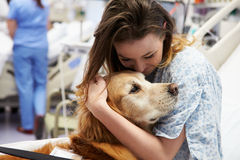 Terapihund som besöker den unga kvinnliga patienten i sjukhus Arkivbild