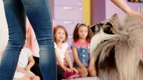 Terapihundarbete med barn i förträningen lager videofilmer