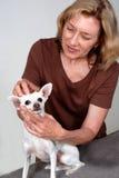 Terapista di massaggio del cane Fotografie Stock Libere da Diritti