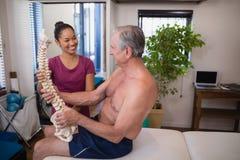 Terapista femminile sorridente che esamina la spina dorsale artificiale della tenuta paziente maschio senza camicia fotografia stock