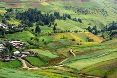 Terassenförmig angelegte Felder Stockbild