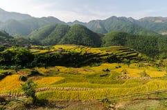 Terassenförmig angelegte Felder Lizenzfreie Stockbilder