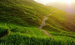 Terassenförmig angelegte Felder Lizenzfreies Stockfoto