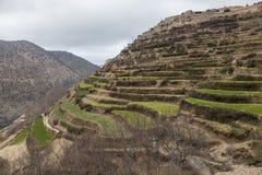 Terassenförmig angelegte Felder in den Bergen Lizenzfreies Stockfoto