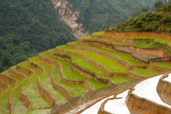 Terassenförmig angelegte Felder des Reises Lizenzfreie Stockfotografie