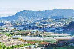 Terassenförmig angelegte Felder im DALat Vietnam Stockfotografie