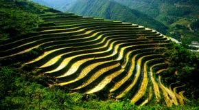 Terassenförmig angelegte Felder, Sapa Lizenzfreies Stockbild