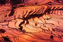 Terassenförmig angelegte Felder in Yunnan-Landschaft Stockfotografie