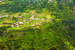 Terassenförmig angelegte Hügel, Madeira Lizenzfreies Stockbild