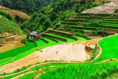 Terassenförmig angelegte Reis-Felder Lizenzfreie Stockfotos