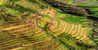 Terassenförmig angelegte Reis-Felder Stockbild