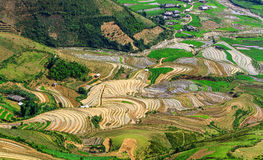 Terassenförmig angelegte Reis-Felder Lizenzfreies Stockfoto