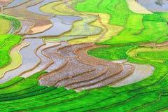 Terassenförmig angelegte Reis-Felder Lizenzfreies Stockbild