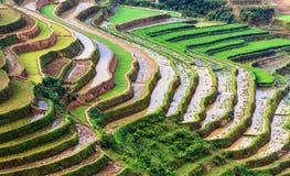 Terassenförmig angelegte Reis-Felder Stockfotos