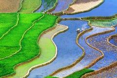 Terassenförmig angelegte Reis-Felder Lizenzfreie Stockfotografie
