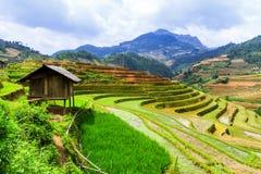 Terassenförmig angelegte Reis-Felder Lizenzfreie Stockbilder
