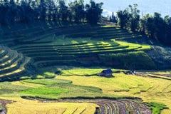 Terassenförmig angelegte Reis-Felder Stockfoto