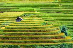 Terassenförmig angelegte Reis filelds Lizenzfreie Stockfotografie