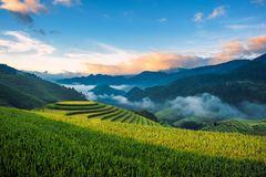 Terassenförmig angelegte Reis filelds Stockbilder