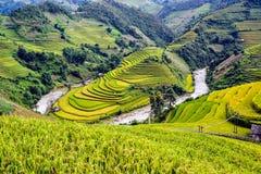 Terassenförmig angelegte Reis filelds Stockfotografie