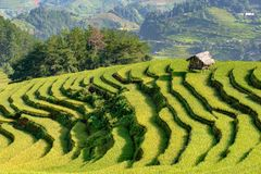 Terassenförmig angelegte Reis filelds Lizenzfreies Stockfoto