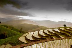 terassenförmig angelegte Reisfeld papongpians maechaen chiangmai Thailand Stockfoto
