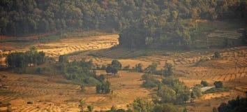 Terassenförmig angelegte Reisfelder Stockfoto