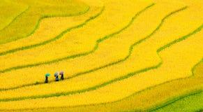 Terassenförmig angelegte Reisfelder Lizenzfreie Stockfotografie