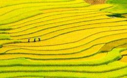 Terassenförmig angelegte Reisfelder Lizenzfreie Stockbilder