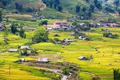 Terassenförmig angelegte Reisfelder Lizenzfreies Stockbild