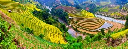 Terassenförmig angelegte Reisfelder Stockbilder