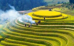 Terassenförmig angelegte Reisfelder Lizenzfreie Stockfotos