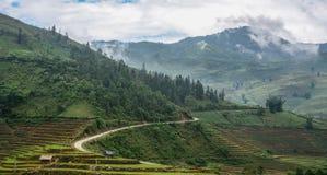 Terassenförmig angelegte Reisfelder auf Regenjahreszeit in Vietnam stockfotografie