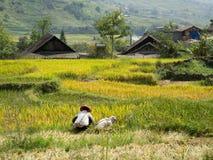 Terassenförmig angelegte Reisfelder in den Hügeln Stockbilder