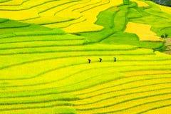 Terassenförmig angelegte Reisfelder - drei Frauen besuchen ihre Reisfelder in MU Cang Chai, Yen Bai, Vietnam Lizenzfreie Stockfotos
