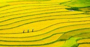 Terassenförmig angelegte Reisfelder - drei Frauen besuchen ihre Reisfelder in MU Cang Chai, Yen Bai, Vietnam Stockfotos
